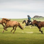 mongol-derby